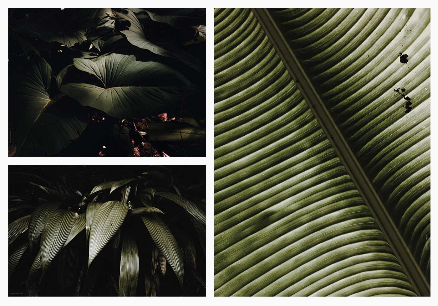 collage of three diferents leaf photos